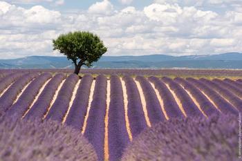 Божественный Прованс в лавандовом цвете