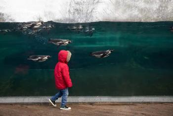 Фотоконкурс BIAZA-2020: фотографии-победители из зоопарков и аквариумов
