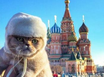 Россия – страна котов!