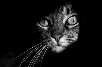 Таинственная кошачья жизнь в чёрно-белых фотографиях