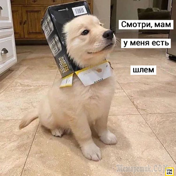 20 забавных мемов с собаками, которые не только милые, но и до одурения милые