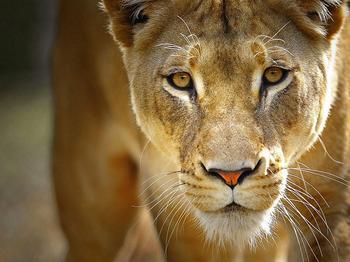 Царство животных в фотографиях