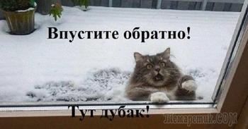 Забавные фотографии котиков в снегу