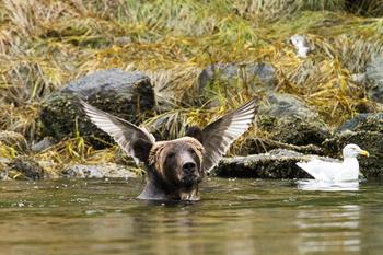 16 снимков от финалистов конкурса на самое смешное фото животных