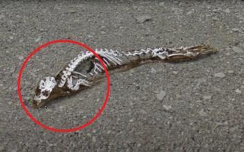 В Антарктиде обнаружены останки неведомой зверушки