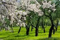 Весна... любовь