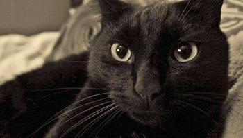 Кот, который вернулся домой после 8 лет отсутствия