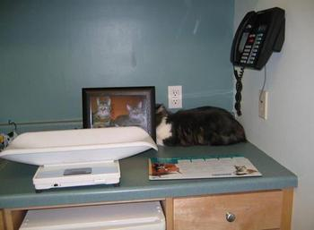 Коты, которые не подозревают, что их заметили