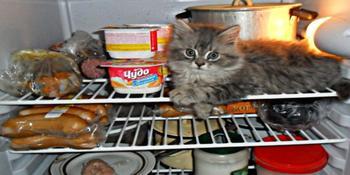 Продукты, которые стоит немедленно выкинуть из холодильника
