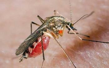 Комары больше нас не потревожат! Наука отучила их пить человеческую кровь
