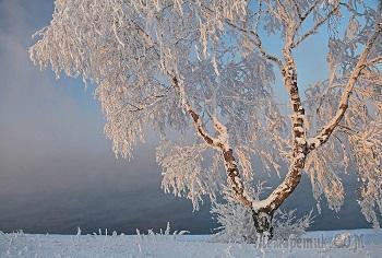 Зимние сны