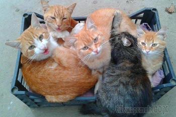 20 кошек, которые любят сидеть в самых неожиданных местах