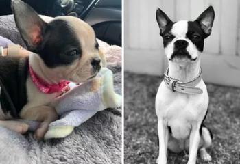 25 фотографий, доказывающих, что собаки очаровательны в любом возрасте