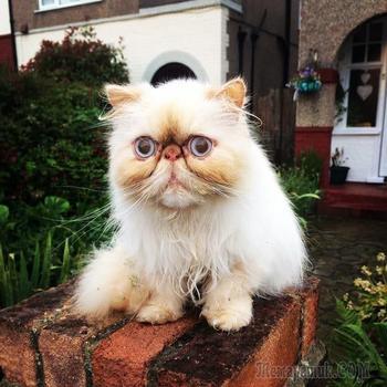 21 фото котиков, в которых вы узнаете себя по утрам