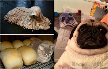 Умилительные животные, которых можно назвать мастерами перевоплощения