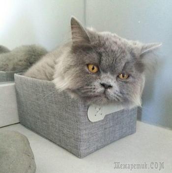 Эти кошки могут залезть куда угодно!