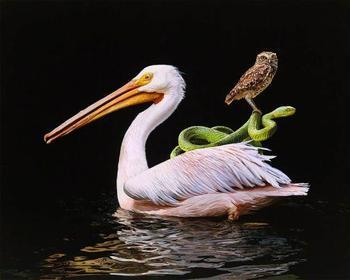 Рисунки животных от Лизы Эриксон