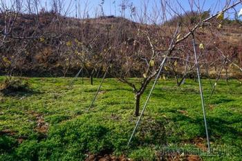 Опоры для деревьев: для чего нужны, какие бывают и как их сделать