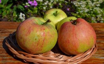 Лучшие 10 сортов яблонь для средней полосы. Часть 2