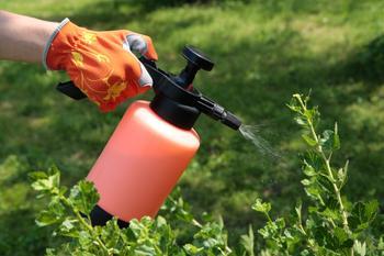 5 причин не выбрасывать ботву помидор, а применить ее с пользой
