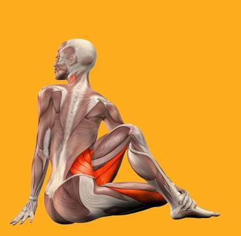 Упражнения, которые сделают точеными ваши руки и спину