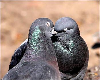 Птичий поцелуй (Стих)