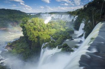 Красивейшие леса планеты