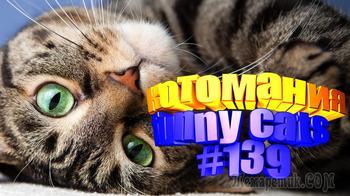 Смешные коты | Приколы с котами | Видео про котов | Котомания # 139