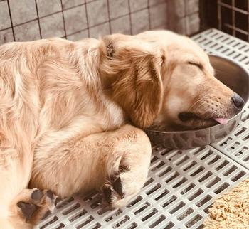 Пёсики заснули в самых неожиданных местах и поза