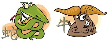 Бык и Змея: совместимость по году рождения