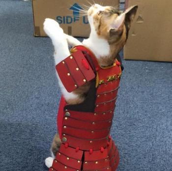 Доспехи для кошек и собак от японской компании Samurai Age