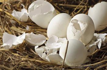 Используем яичную скорлупу как удобрение на огороде