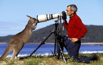 Доказательства того, что фотографы диких животных никогда не скучают на своей работе