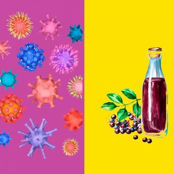 Противовирусные свойства бузины