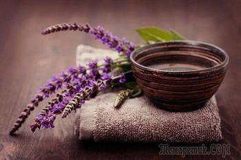 Лечебные свойства травы шалфей