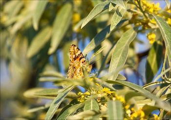 Фотозарисовка.  Танцы бабочек