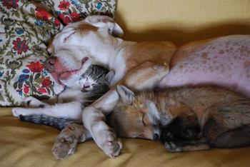 Спящие зверушки, от вида которых у вас растает сердце
