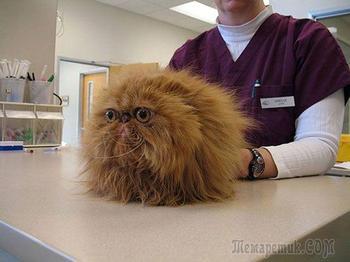 Коты, которые осознали, что находятся у ветеринара