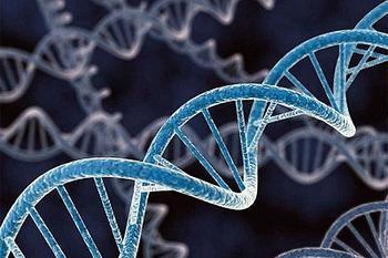 Почему люди так мало живут? ДНК человека рассчитана на 440 лет, выяснили учёные