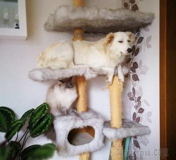 17 кошек и собак, которые просто поменялись ролями