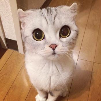 Хана – кошка с самыми большими глазами
