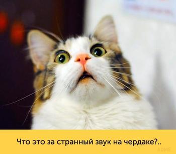 Эти кошки — настоящие королевы драмы