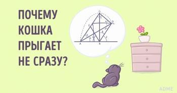 Ученые доказали, что кошки понимают физику