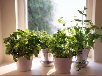 Какую зелень можно перенести с огорода в дом осенью?
