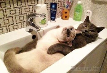 Самые смешные и очаровательные котики, которые подарят прекрасное настроение