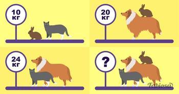 Задачка по математике: сколько весят все животные?