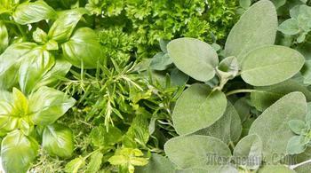 Непривычная зелень на грядках