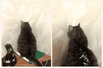 Фотографии настоящей кошачьей обиды