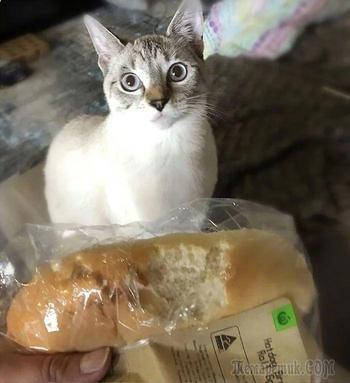Люди делятся варварскими поступками своих кошек и вот их 20 смешных «преступлений»