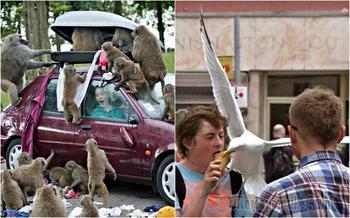 Убойные фотографии о взаимоотношениях людей и животных